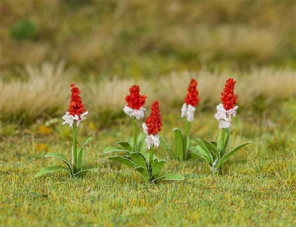 Faller 181267 - H0 - 32 Orchideenprimel, 12 mm
